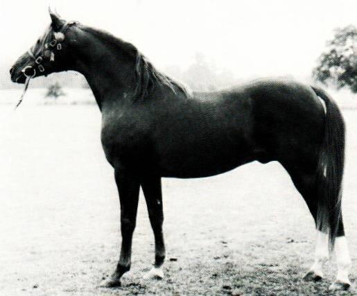 صورة خيول عربية , اروع خيول العرب 4459 4