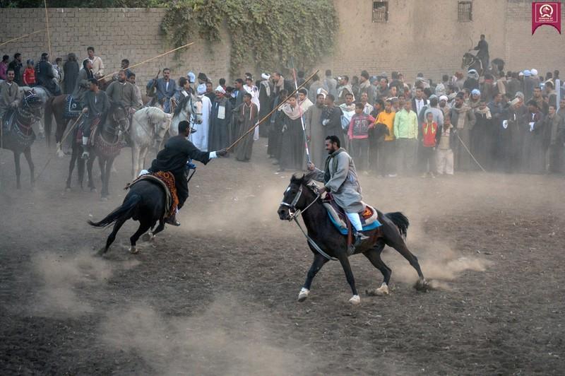 صورة خيول عربية , اروع خيول العرب 4459 8