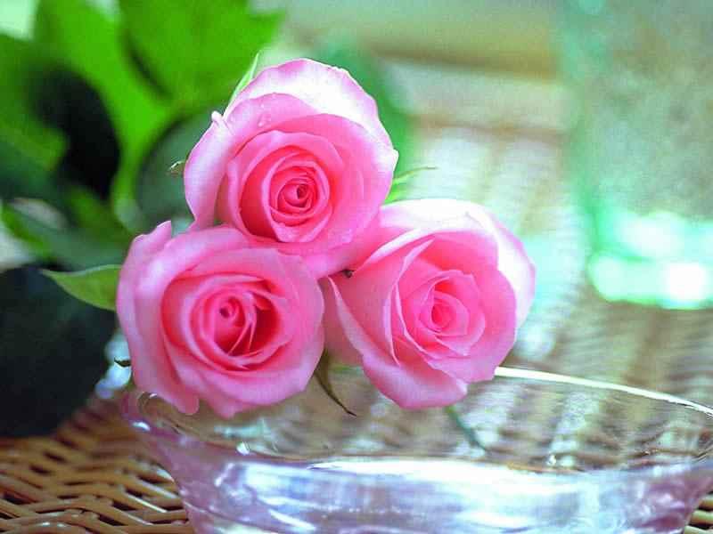 صورة احلى صور ورد , اجمل صور ورد 2332