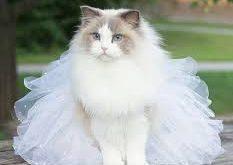 صوره صور قطط جميلة , صور عن القطط
