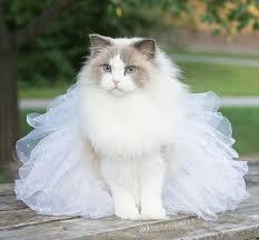 صورة صور قطط جميلة , صور عن القطط