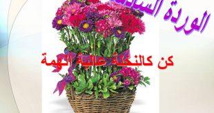 بالصور زهور الكلمات , احلي زهور وكلمات 2776 9 310x165