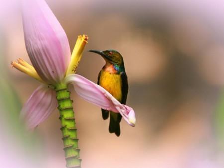 صورة عصافير الزينة , احلي صور عصافير