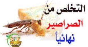 صوره القضاء على الصراصير , كيف اتخلص من الصراصير