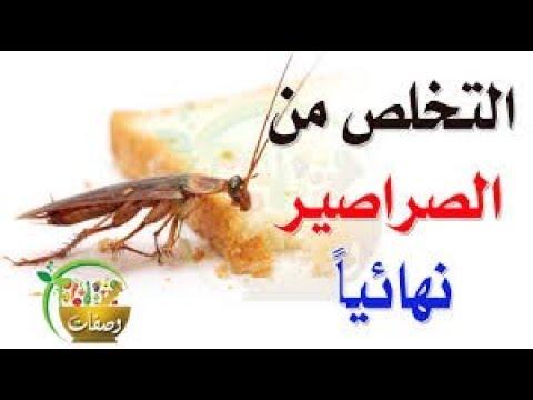 صورة القضاء على الصراصير , كيف اتخلص من الصراصير