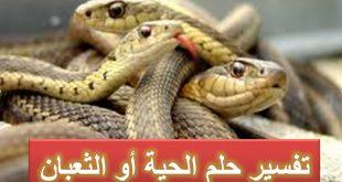 رؤية ثعبان في المنام , تفسير رؤية الثعابين في المنام
