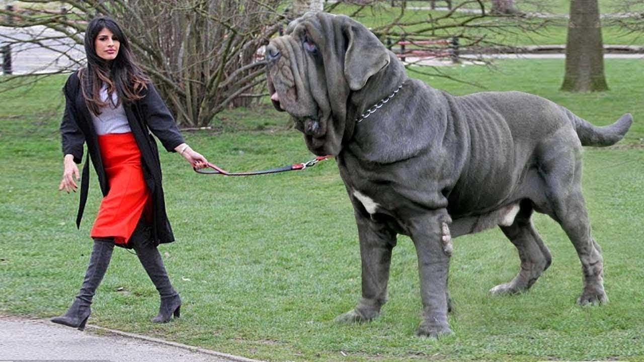 صورة اخطر انواع الكلاب , تعرف على سلالات الكلاب واخطرها