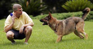 صوره كيفية تدريب الكلاب , خطوات لتدريب وترويج الكلاب