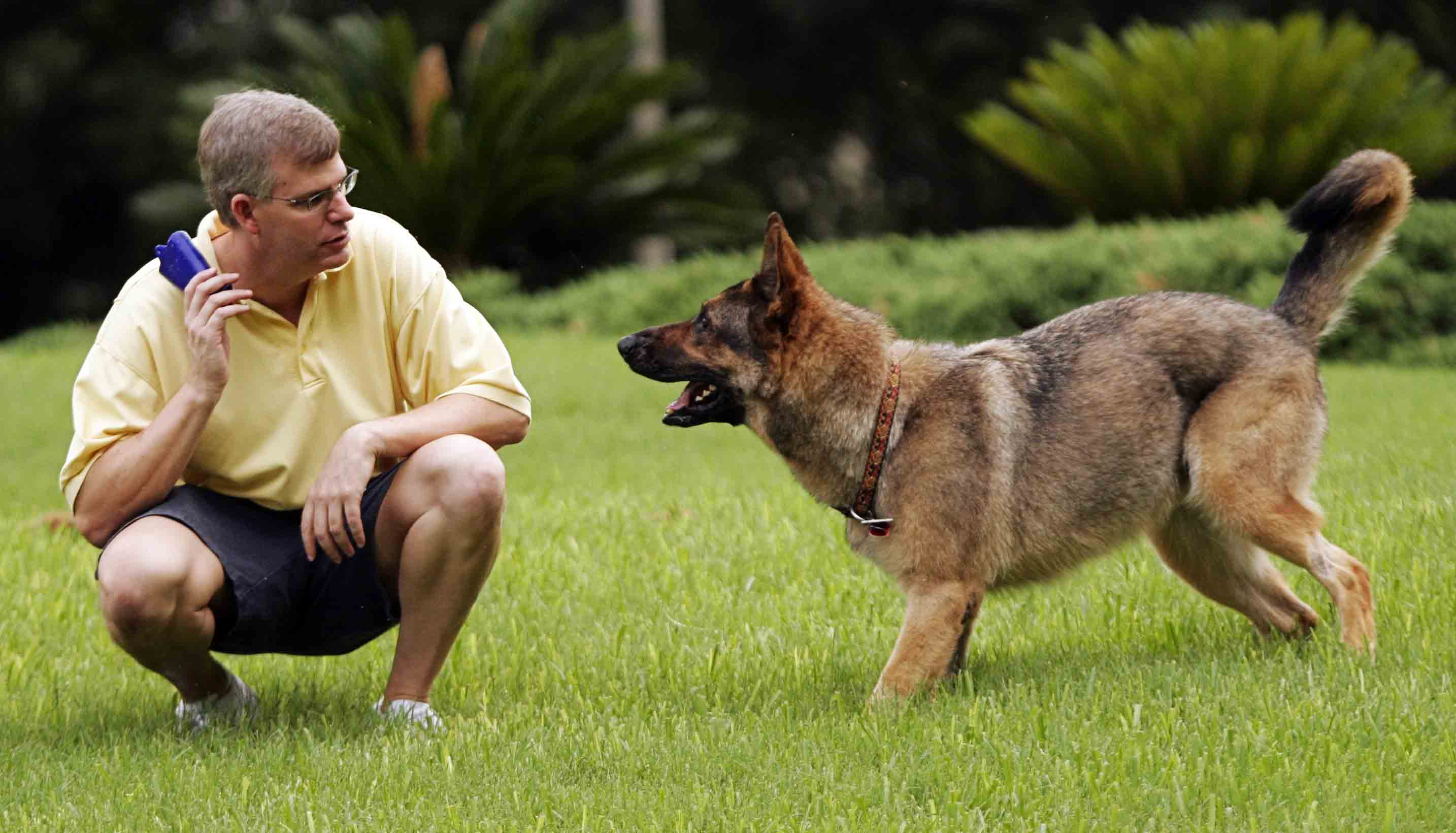 صورة كيفية تدريب الكلاب , خطوات لتدريب وترويج الكلاب
