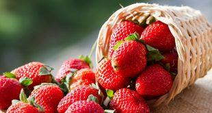 صوره فوائد الفراولة , ودورها الوقائي والعلاجي لجسم الانسان