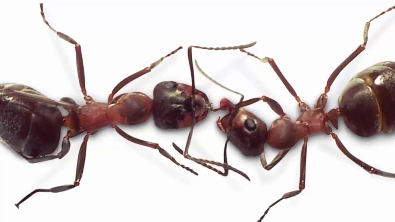 صورة معلومات عن النمل , اغرب المعلومات المدهشه