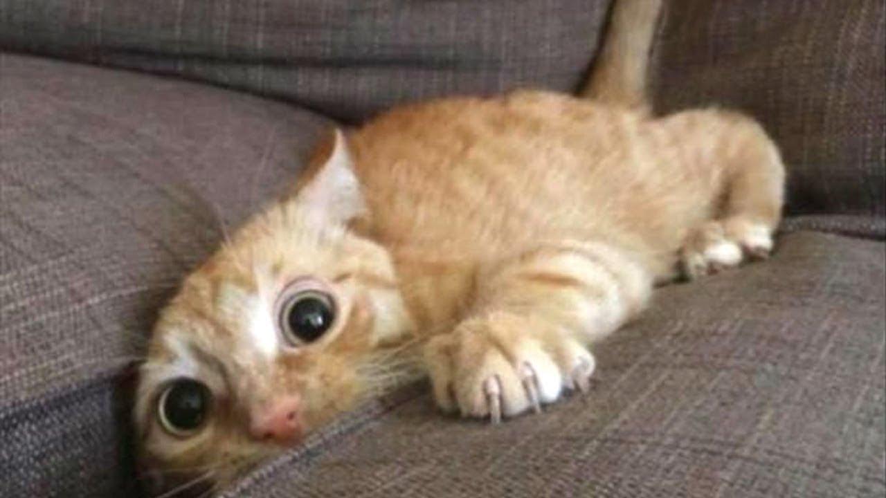 بالصور قطط مضحكة , خلفيات قطه تضحك موت 2445 10