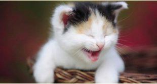 صور قطط مضحكة , خلفيات قطه تضحك موت
