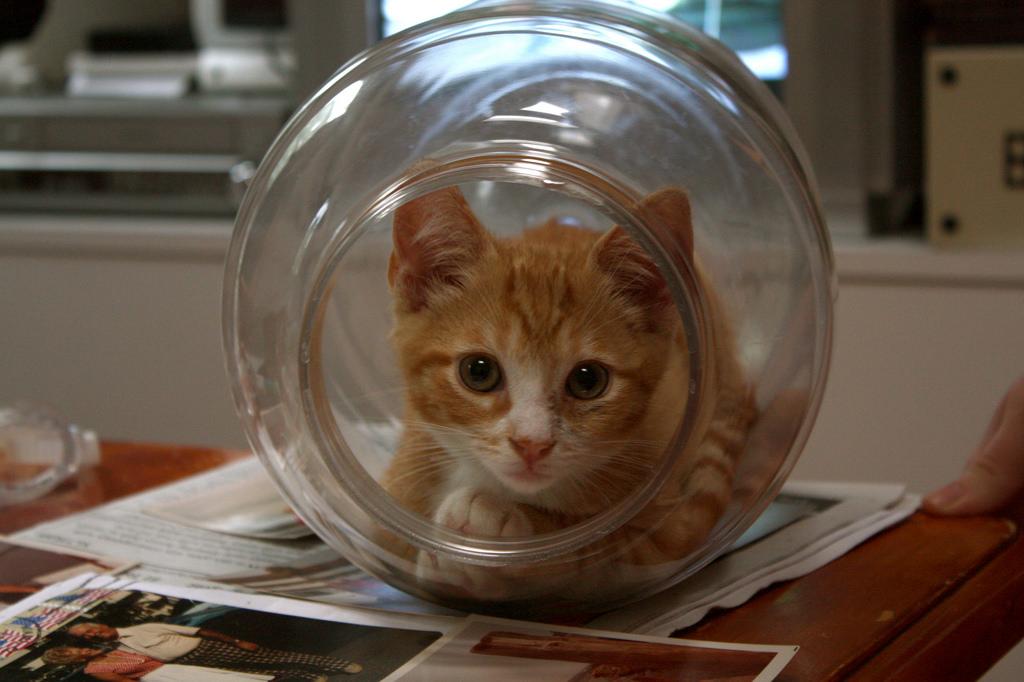 بالصور قطط مضحكة , خلفيات قطه تضحك موت 2445 12