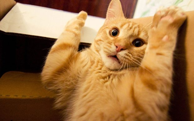 بالصور قطط مضحكة , خلفيات قطه تضحك موت 2445 2