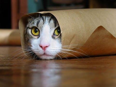 بالصور قطط مضحكة , خلفيات قطه تضحك موت 2445 4