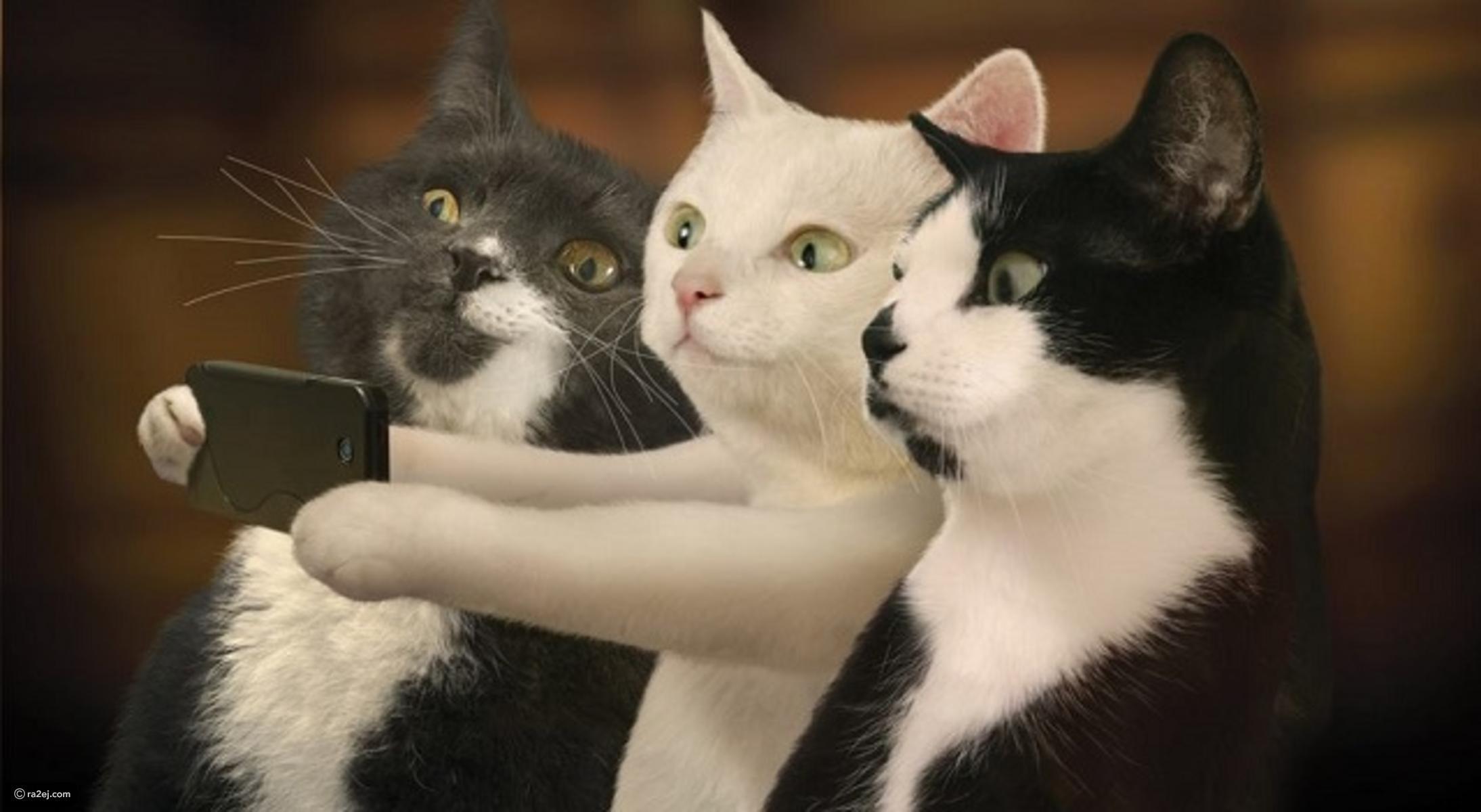 بالصور قطط مضحكة , خلفيات قطه تضحك موت 2445 6