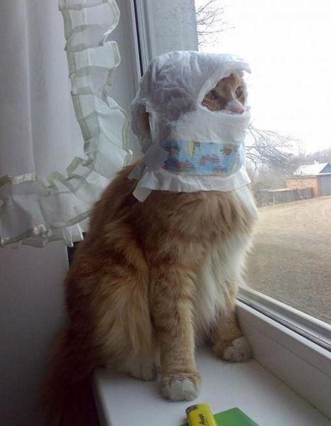 بالصور قطط مضحكة , خلفيات قطه تضحك موت 2445 7