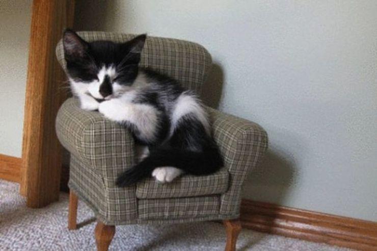 بالصور قطط مضحكة , خلفيات قطه تضحك موت 2445 8