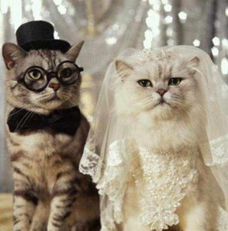 بالصور قطط مضحكة , خلفيات قطه تضحك موت 2445