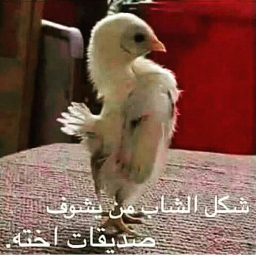 بالصور صور مضحكة جدا , اضحك من قلبك 2452