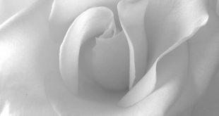 صور خلفية بيضاء ساده , اروع خلفيات للموبايل