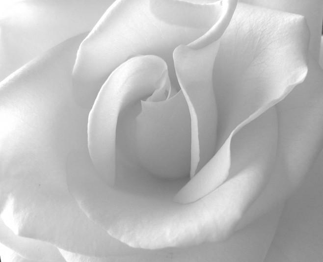 صوره خلفية بيضاء ساده , اروع خلفيات للموبايل