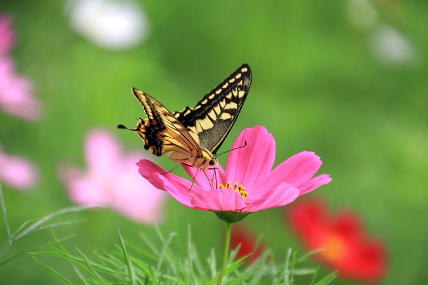 بالصور تنزيل صور جميلة , اجمل خلفيات جميلة 2688 7