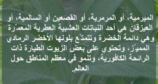 عشبة الميرمية , اضرار عشب الميرمية