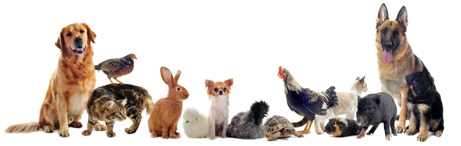 صور حيوانات اليفة , شاهد اجمل الحيوانات الاليفة