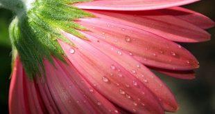 بالصور خلفيات زهور , شاهد اجمل خلفيات زهور 3461 12 310x165