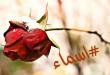 بالصور صور اسم اسماء , تعرف على صفات ومعنى اسم اسماء 3472 2 110x75