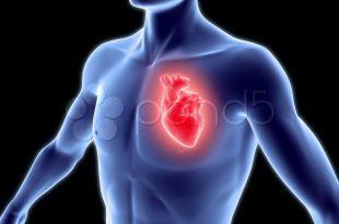صور صور قلب الانسان , شاهد صور قلب الانسان