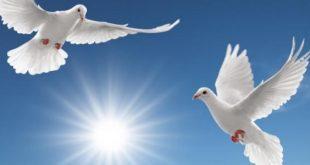 صوره صور عن السلام , خلفيات رائعة عن السلام