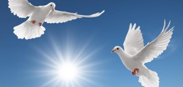 صورة صور عن السلام , انتشار السلام في العالم
