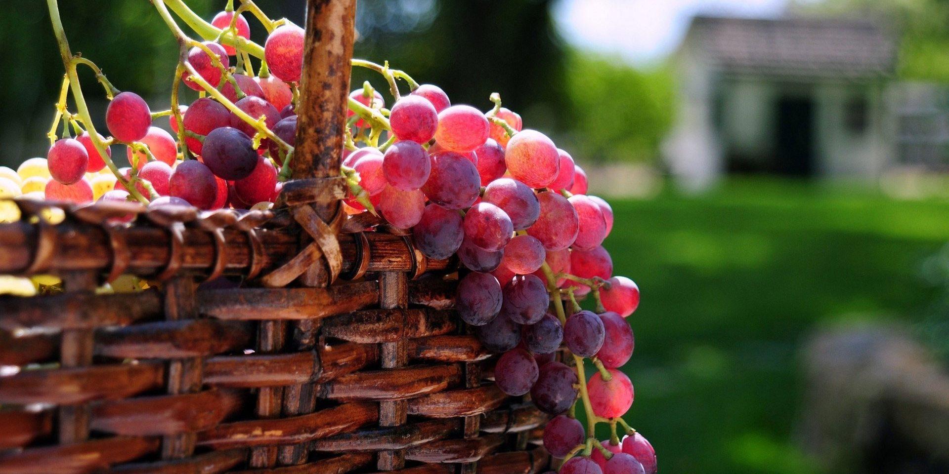 صورة فوائد العنب الاحمر , ماهي فائدة العنب الاحمر علي الصحة
