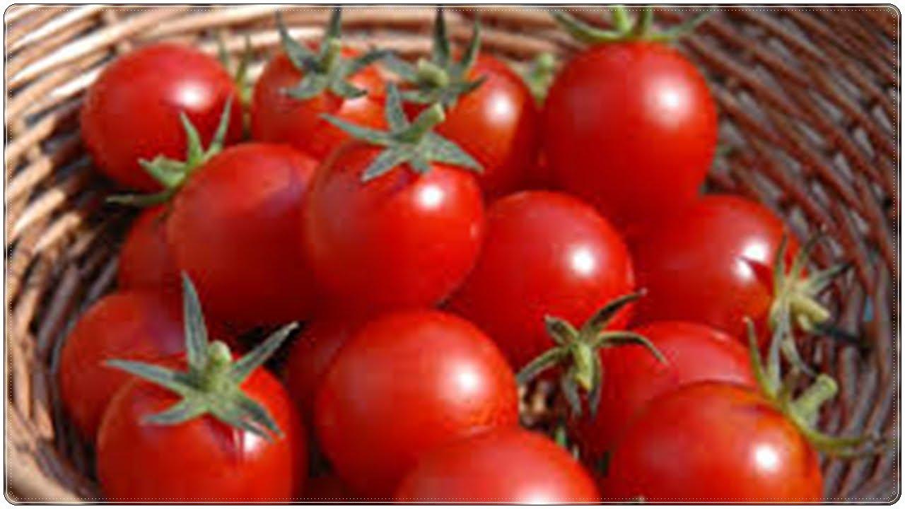 بالصور فوائد الطماطم , تعرفوا علي فائدة الطماطم للجسم 3808 1