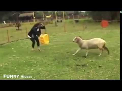 صوره مواقف مضحكة جدا , اقوي المواقف والطرائف للحيوانات