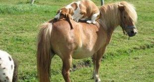 صور مواقف مضحكة جدا , اقوي المواقف والطرائف للحيوانات
