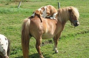 بالصور مواقف مضحكة جدا , اقوي المواقف والطرائف للحيوانات 3859 3 310x205