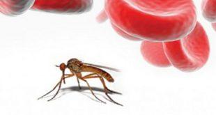 بالصور مرض الملاريا , ما هو مرض الملاريا واعراضه 3860 3 310x165