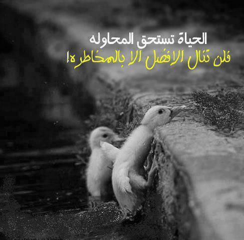 صورة عبارات قصيره جميله , كلمات حلوة عن الحياة 3898 6