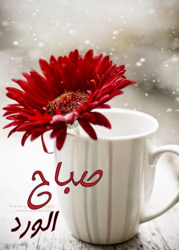 بالصور صور حب صباح الخير , الخير والحب لاهل الخير 3906 4