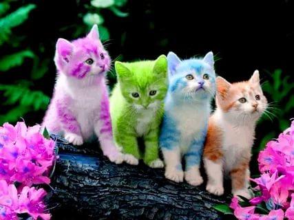صوره قطط وكلاب , صور لكلاب وقطط اشقية