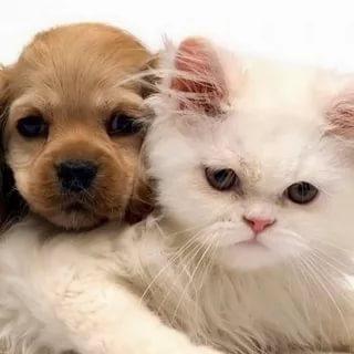 بالصور قطط وكلاب , صور لكلاب وقطط اشقية 3940 10