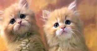 بالصور قطط وكلاب , صور لكلاب وقطط اشقية 3940 11 310x165