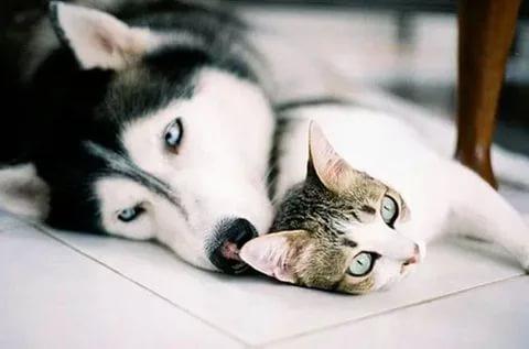 بالصور قطط وكلاب , صور لكلاب وقطط اشقية 3940 2