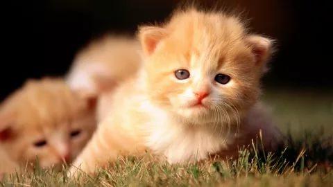 بالصور قطط وكلاب , صور لكلاب وقطط اشقية 3940 3