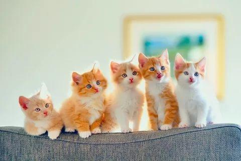 بالصور قطط وكلاب , صور لكلاب وقطط اشقية 3940 4