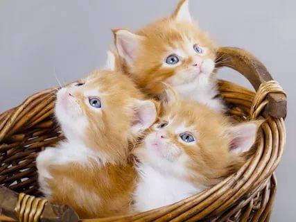 بالصور قطط وكلاب , صور لكلاب وقطط اشقية 3940 5